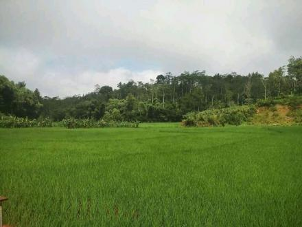 Tanaman Subur Petani Makmur